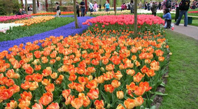 Tulip Festival Parade